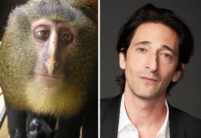 9-celebridades-y-sus-parecidos-con-animales_1