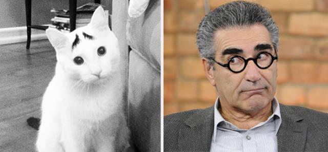 9-celebridades-y-sus-parecidos-con-animales_4