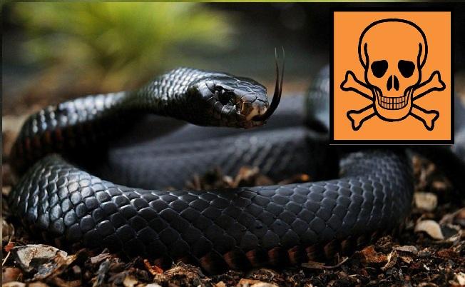 TOP 10 Animales más Venenosos y Mortales de la Tierra ¡Pueden matarte en Segundos! - CABROWORLD