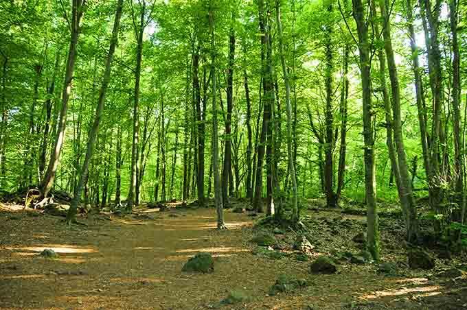 fageda_den_jorda_catalonia_garrotxa_forest_spain_680
