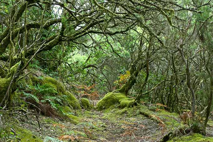 rainforest_in_garajonay_national_park_la_gomera_canary_islands_spain_680