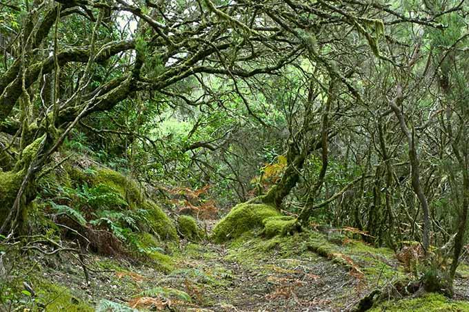 rainforest_in_garajonay_national_park_la_gomera_canary_islands_spain_680