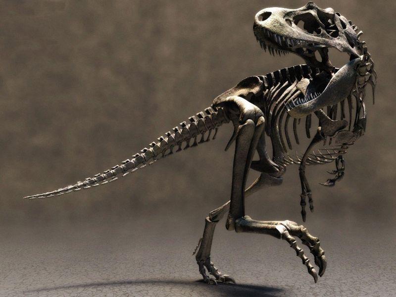 esqueleto-de-dinosaurios2