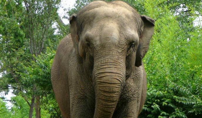 elefante_g
