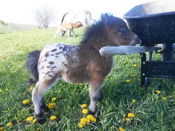 tiny-horses-15