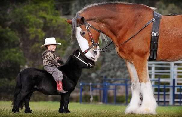 tiny-horses-16