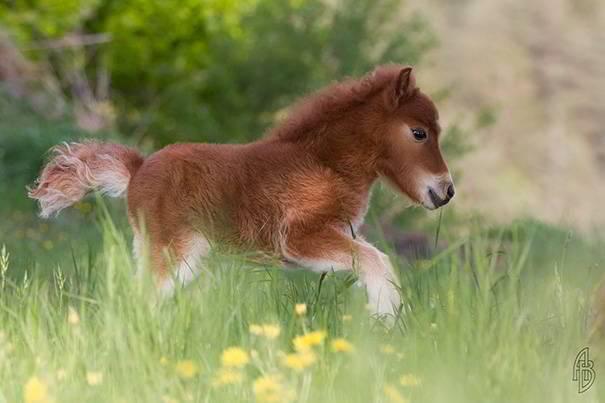 tiny-horses-3