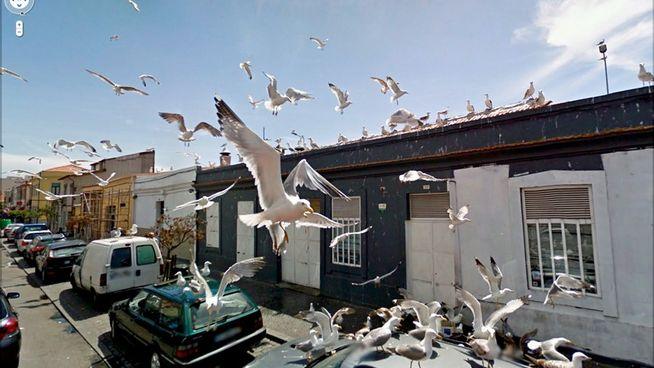 imagenes-surreales-Google-Street-View_MDSIMA20120113_0183_4 - copia