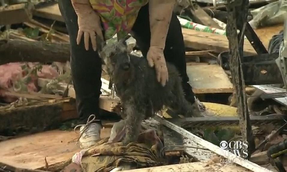 ¡Vaya sorpresa! ¡Aparece su perro en directo después de un TORNADO! - CABROWORLD