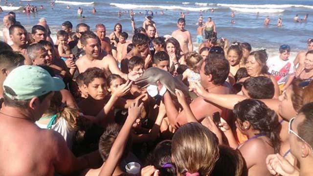 asesinan-a-un-delfín-que-usaron-para-sacarse-selfies