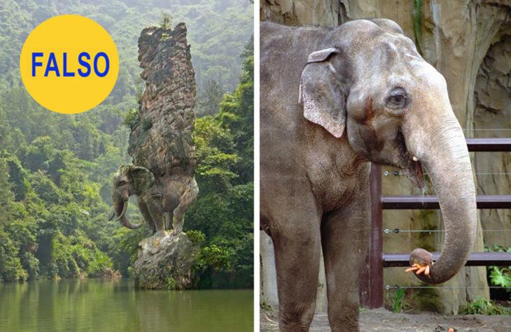 elefante-730x475
