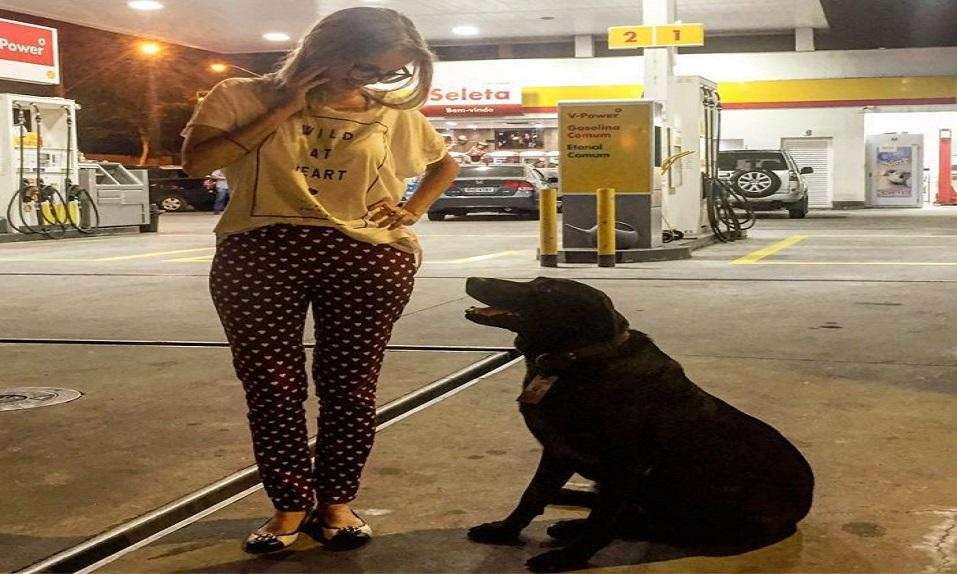 Â¡Este perro CALLEJERO consigue trabajar en una gasolinera de recepcionista! - CABROWORLD