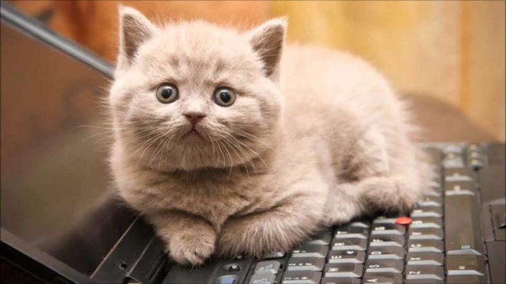 gato-computadora-730x411