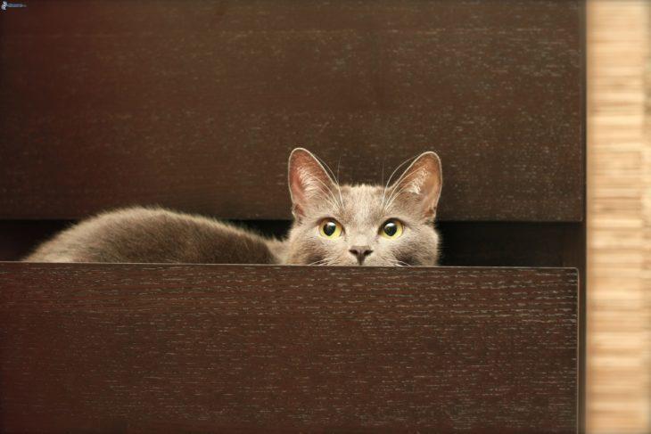 gato-en-cajón-730x487