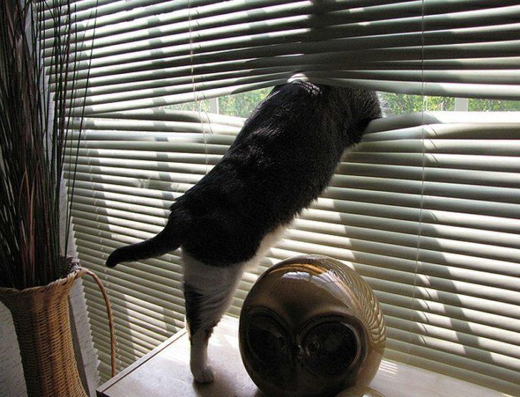 gato-en-la-ventana-730x558