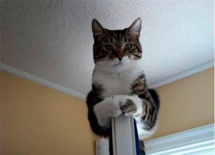 gato-puerta-730x528