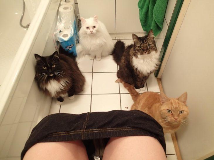 gatos-en-el-baño-730x547