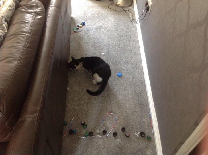gatos-escondiendo-cosas-730x545