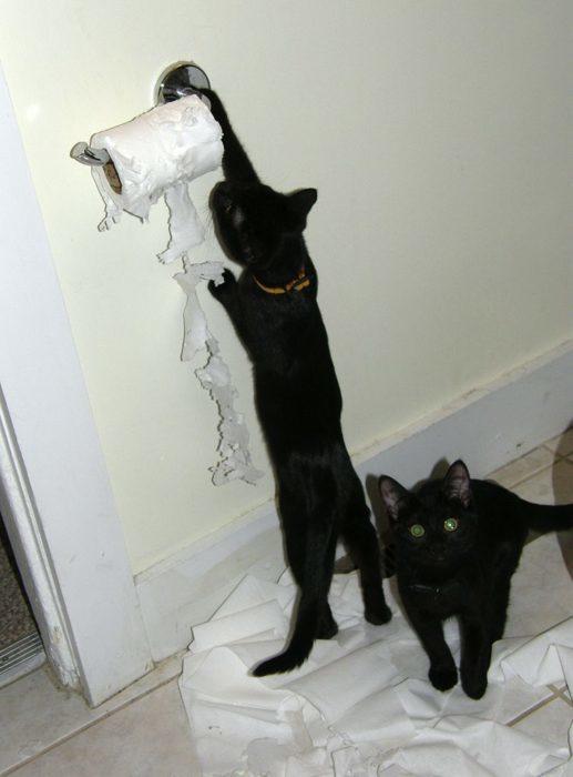gatos-papel-517x700
