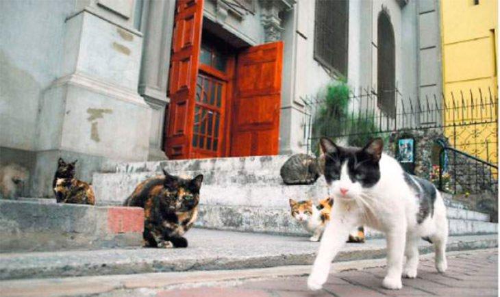 gatos-varios-730x434