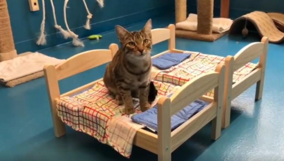 Ikea dona camas de mu ecas para un refugio de animales for Cama munecas ikea