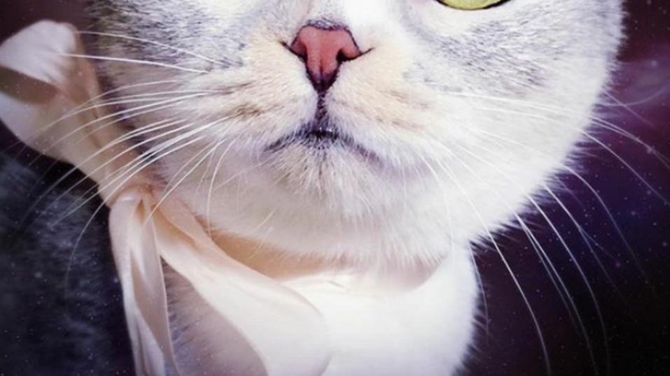 Ella es Hana, la gatita japonesa que está ENAMORANDO a todo Instagram con sus OJOS - CABROWORLD