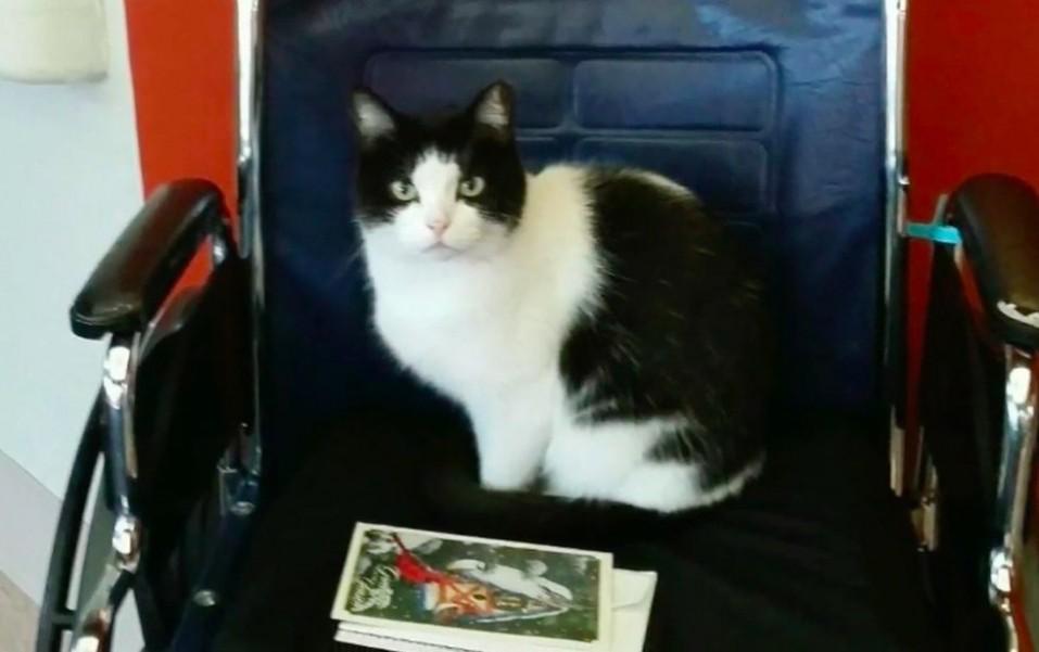 oreo-gato-que-vive-en-un-hogar-de-ancianos-5
