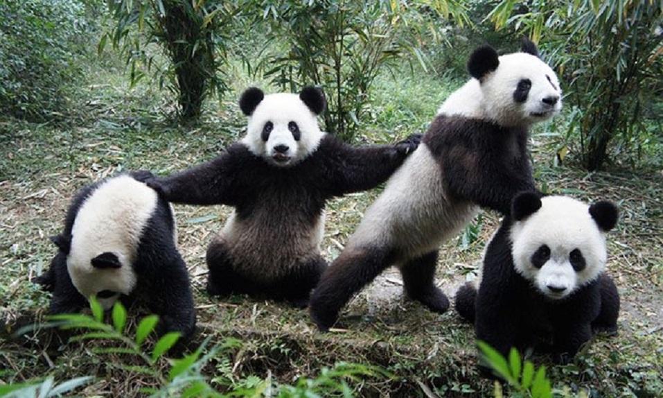 ¡Fotos de ANIMALES que parece que acaben de sacar un DISCO! - CABROWORLD