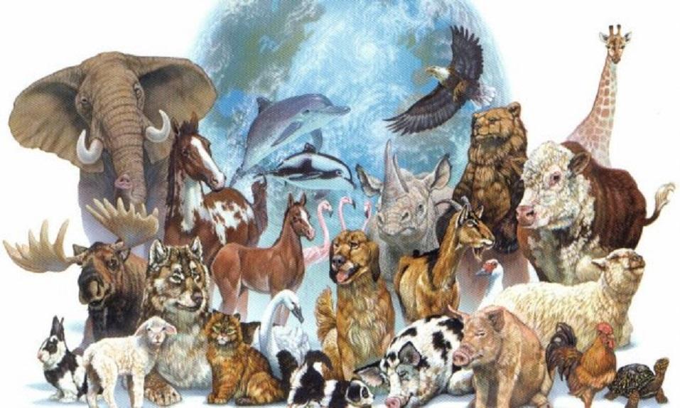 Datos que seguramente DESCONOCÍAS de algunos animales y que te harán un poco más sabio - CABROWORLD