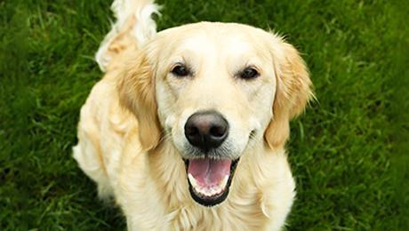 Qu tiene de diferente un lobo de un perro cabroworld for Ahuyentar perros del jardin