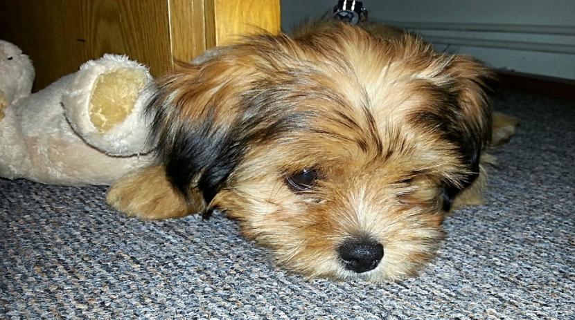 causas_depresion_en_perros