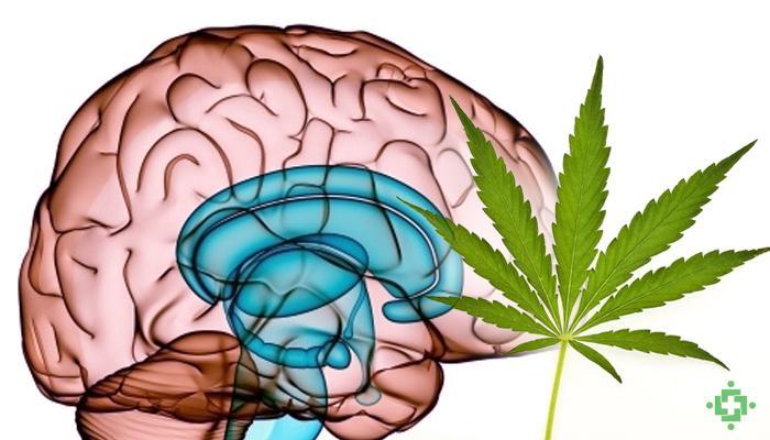 La marihuana mejora el sexo? - Dinafem Seeds
