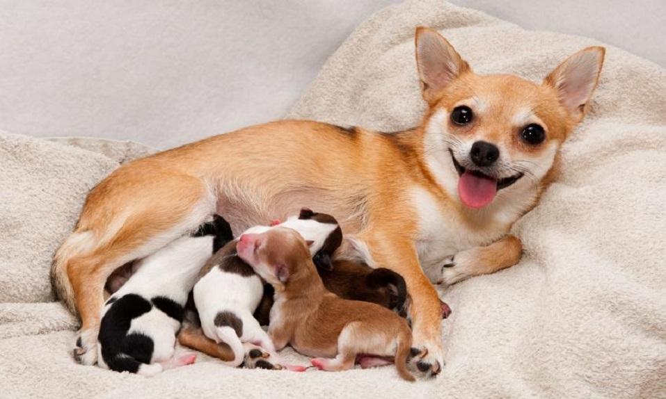 Un embarazo semanas perra cuantas una dura de