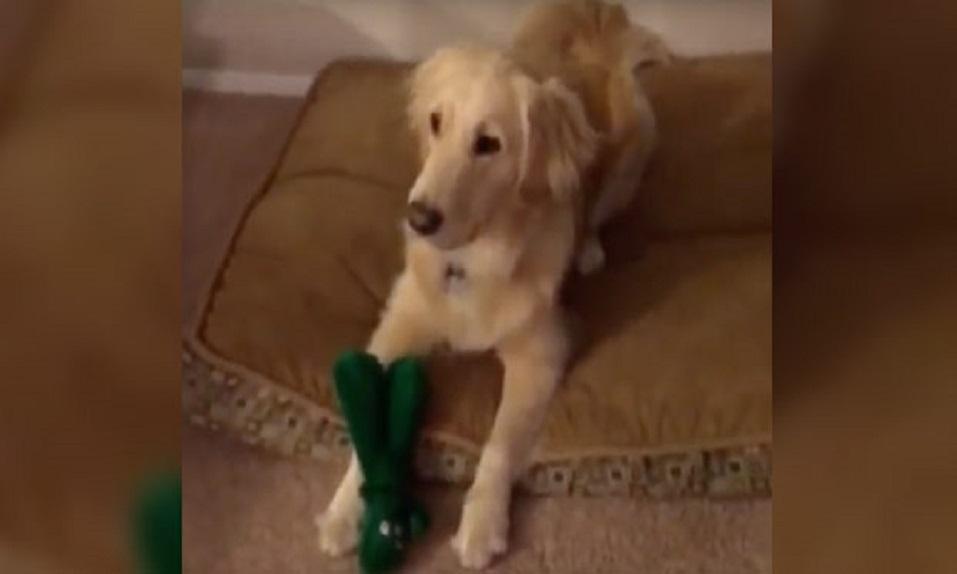 ¡Se pone un DISFRAZ del juguete favorito de su perro y mira qué REACCIÓN! - CABROWORLD