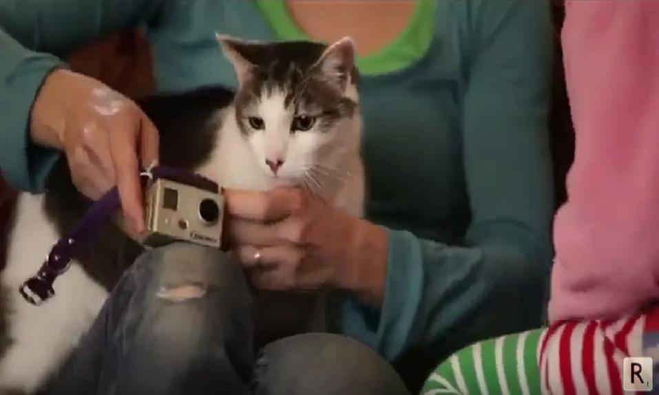 ¡Ponen cámara en el collar a un gato y descubren que iba a un puticlub! - CABROWORLD