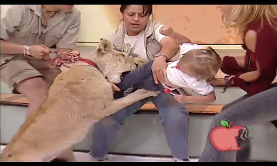 ¡Esta niña es atacada en un plató de TV por una LEONA en DIRECTO! - CABROWORLD