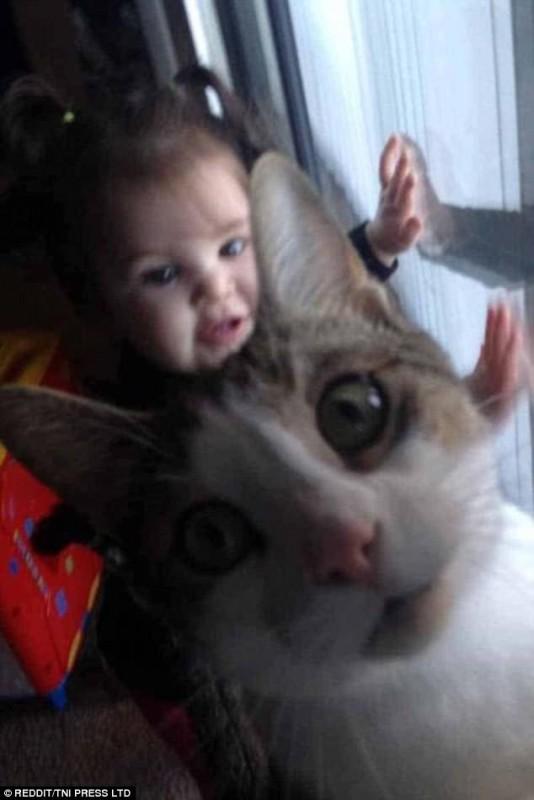gatosquesecolaronenfotos2