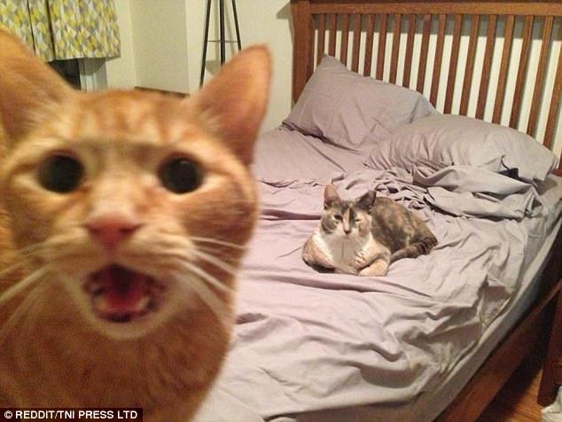 gatosquesecolaronenfotos7