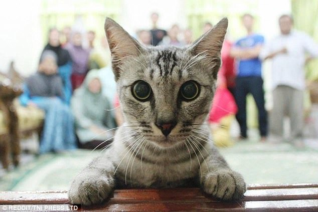 gatosquesecolaronenfotos9