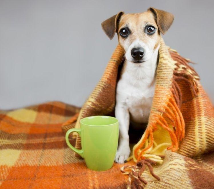 Resultado de imagen para perros resfriados