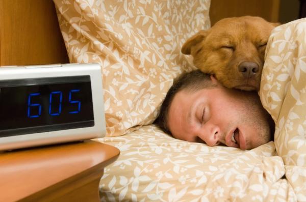 dormirconperrostodoloquedebessaber