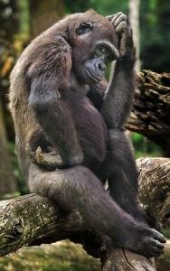mono rascandose el marote