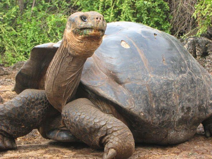 tortugasgalapagos2