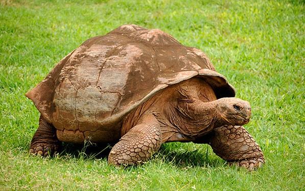 tortugasgalapagos5