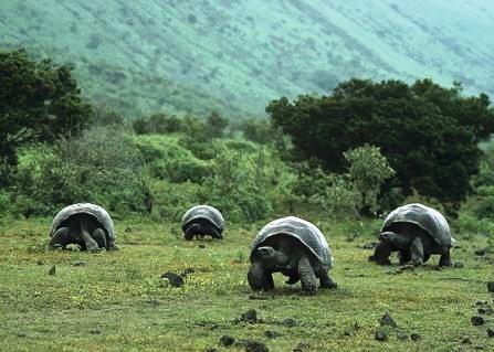 tortugasgalapagos6